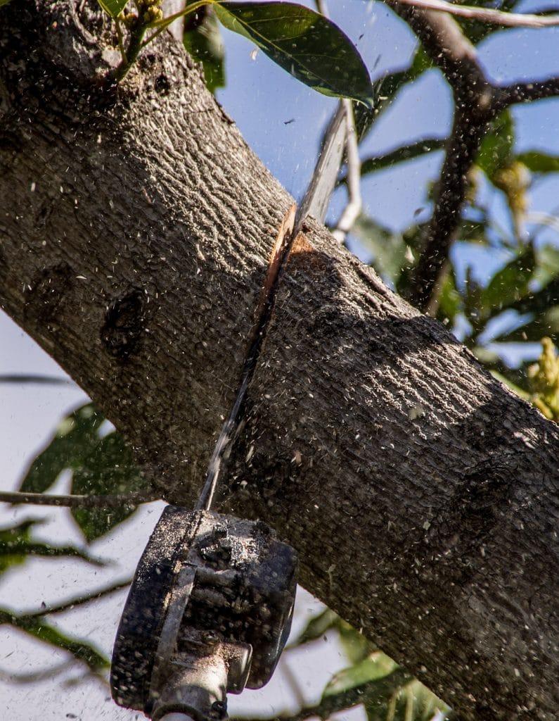 כריתת עץ עם מסור חשמלי